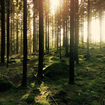 芬多精與負離子,森林療癒的研究成果