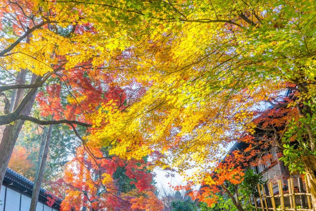 進入東福寺前的楓葉