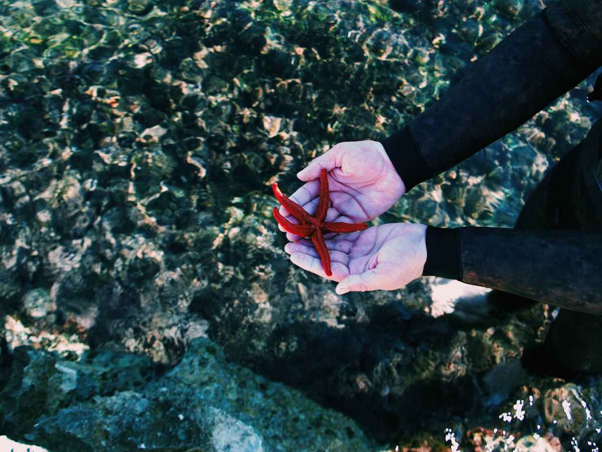 high angle photo of starfish on person s hands
