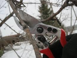 Обрізка плодових дерев взимку. Особливості та корисні поради.