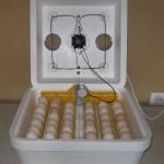 Виведення курчат в інкубаторі в домашніх умовах. Інструкція.