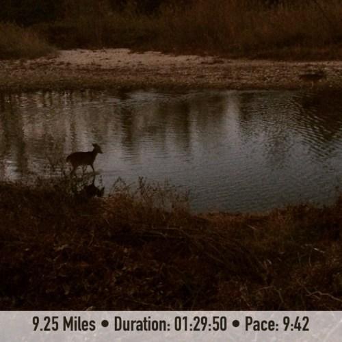 Runchat Hunt Wildlife