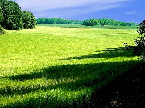 Landscape - Green View, Halla