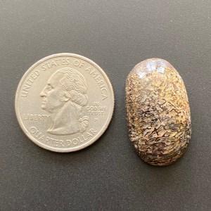 Dinosaur Bone Agate / Agatized / fossilized