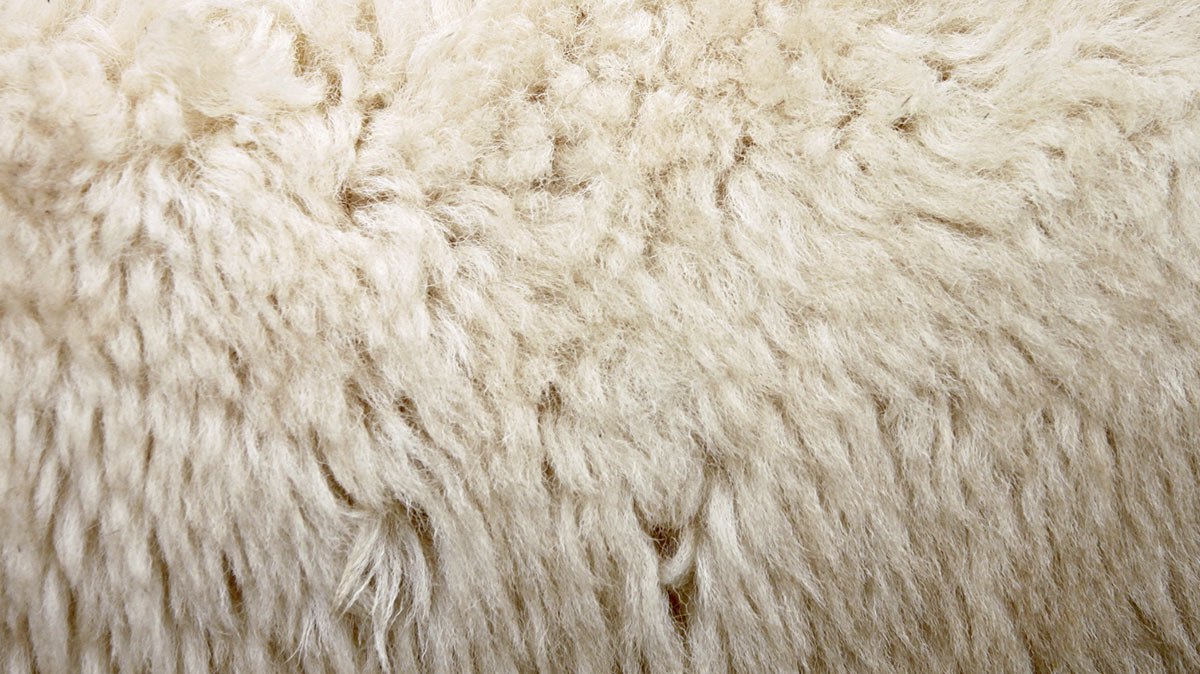 complete-wool-services-clare-5453-image