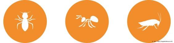 termite-ant-01