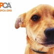 ASPCA Doc Kicked Dying Dog, Colleagues Say