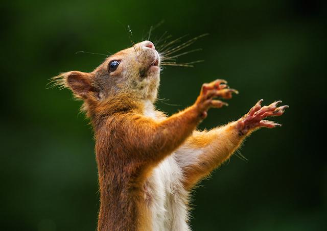 052915_squirrel.jpg