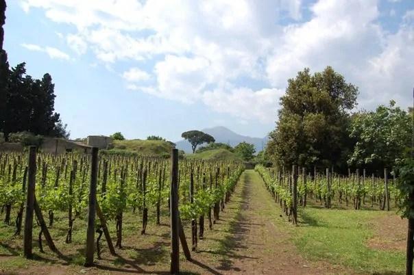 Vineyard at Pompeii