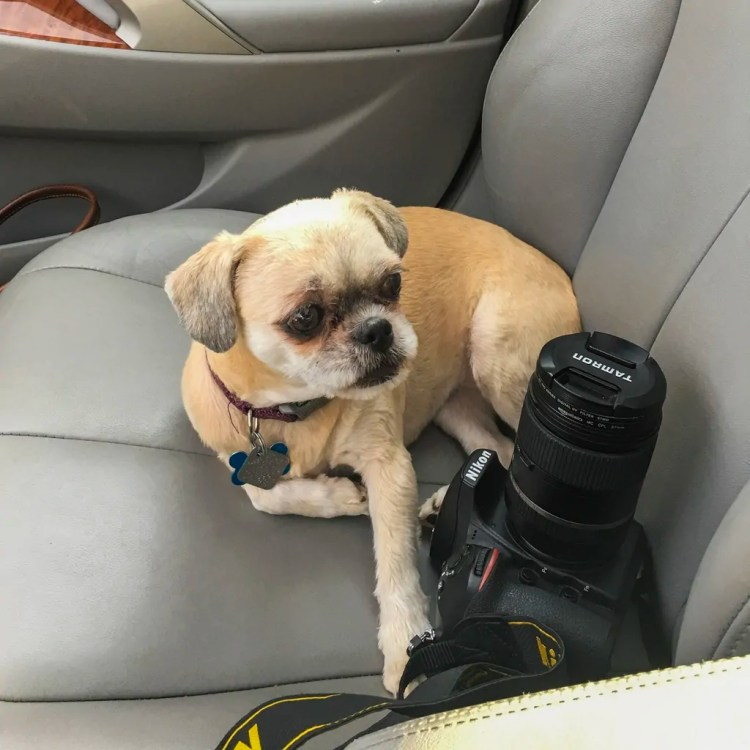 Lucy and My Nikon-My Two Favorite Things