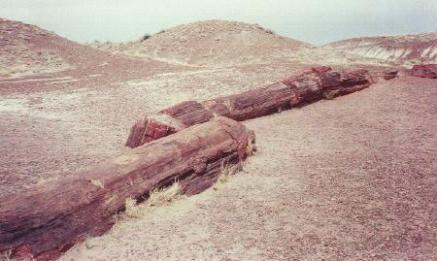 petrified-forest