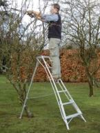 pruning fruit trees tripod ladder