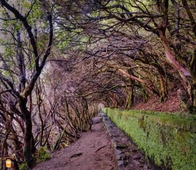 Levada das 25 Fontes e do Risco - Madeira 11