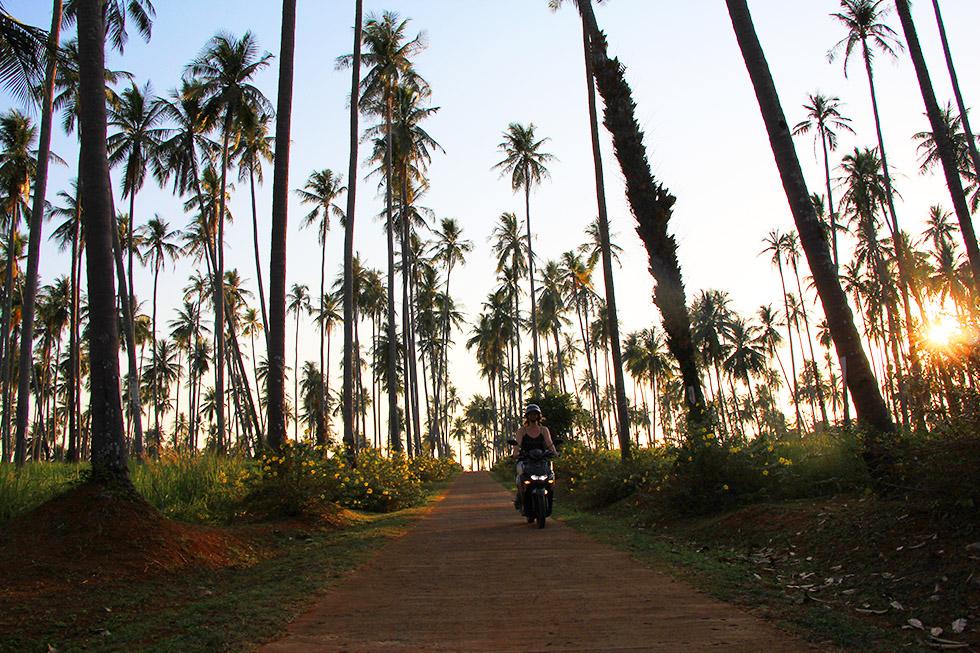 Koh Mak's palmtrees