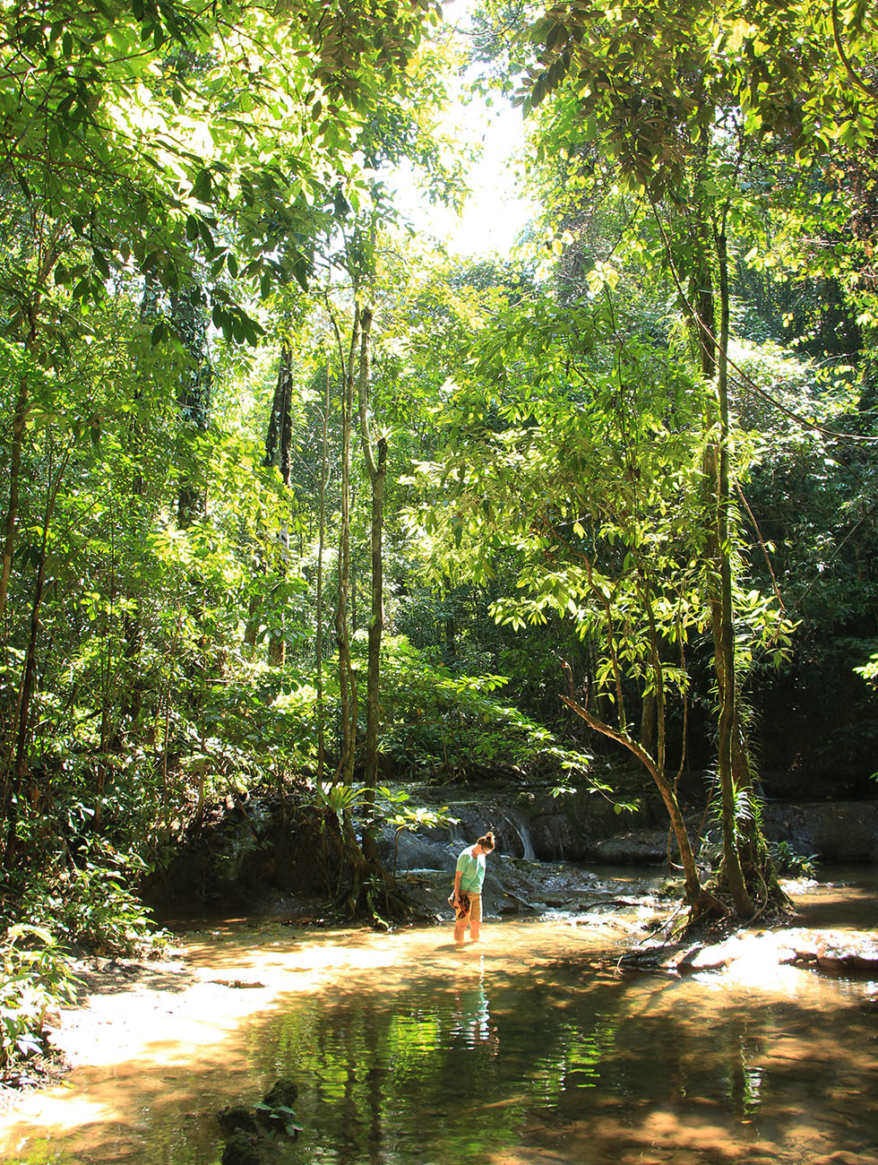 Sa Nang Manora Forest Park in Phang Nga