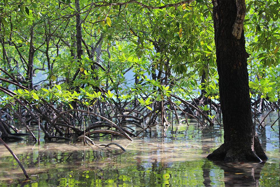 Mangrove forest of Ao Mai Ngam