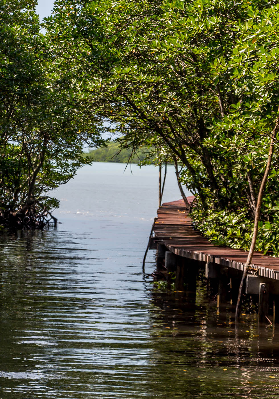 The Mangrove walkway