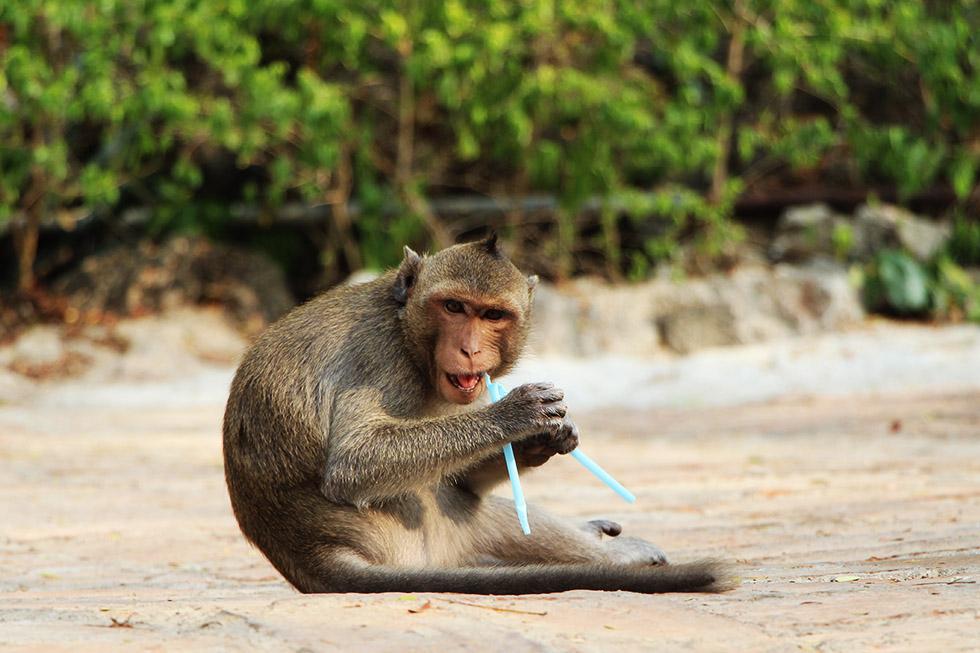 Monkeys are everywhere in Phetchaburi