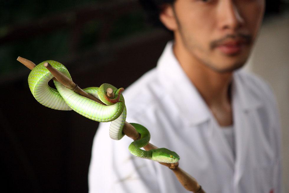 Snake Farm in Bangkok