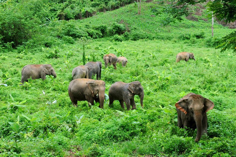 Boon Lott's Elephant Sanctuary Sukhothai