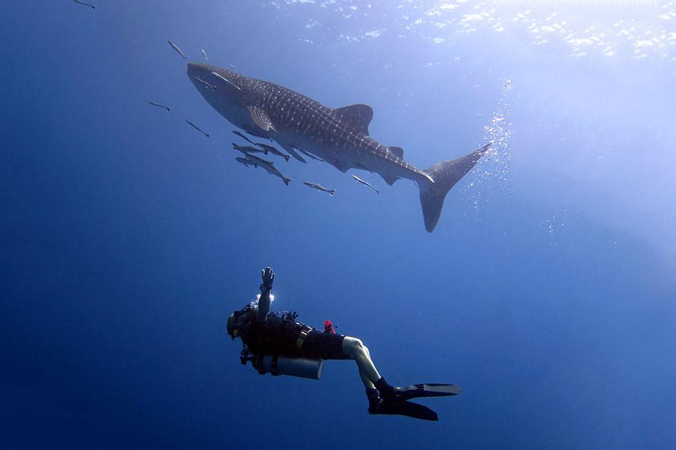 BB Divers Koh Chang