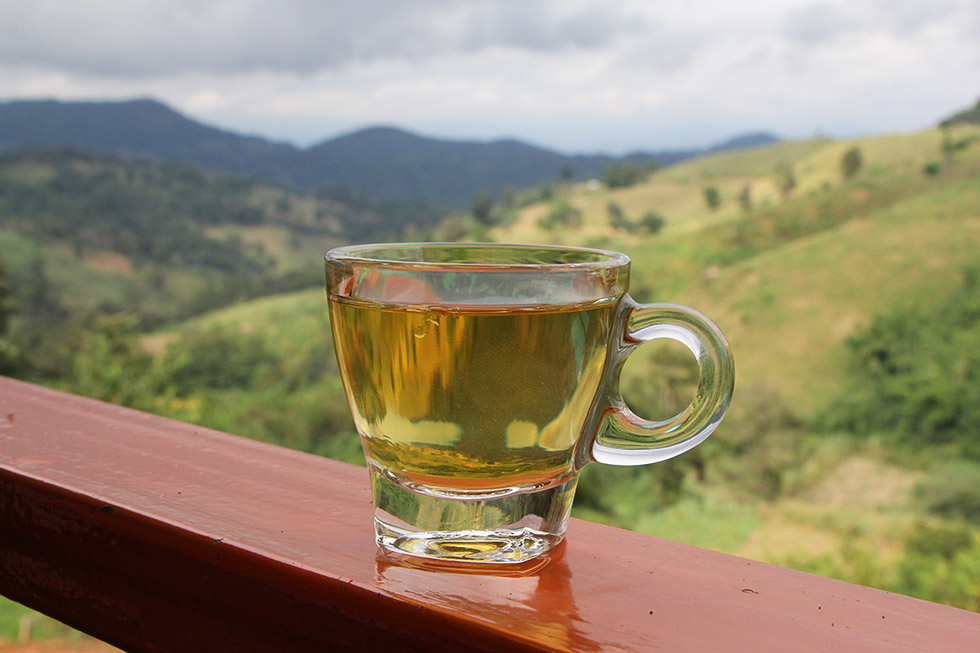 A must: drinking tea in Mae Salong