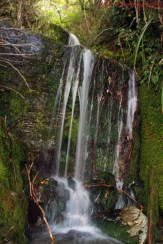 Waterfall on Te Kere Haka Scenic Reserve walking track, Kingston