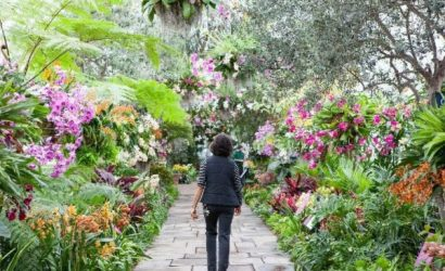 All-Garden Pass to New York Botanical Garden