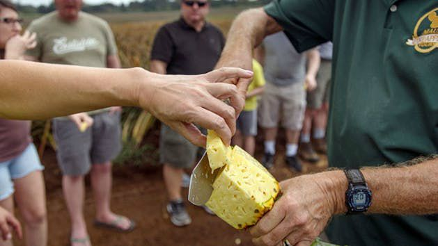 1-Day Tour to Maui Gold Pineapple and Iao Valley, Hawaii