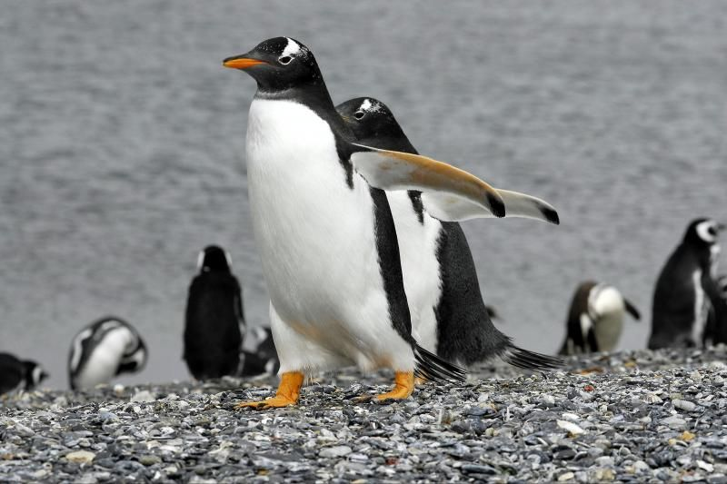 Martillo Island Penguin Walking Tour