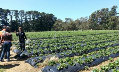 Mornington Peninsula Tour with Strawberry Farm
