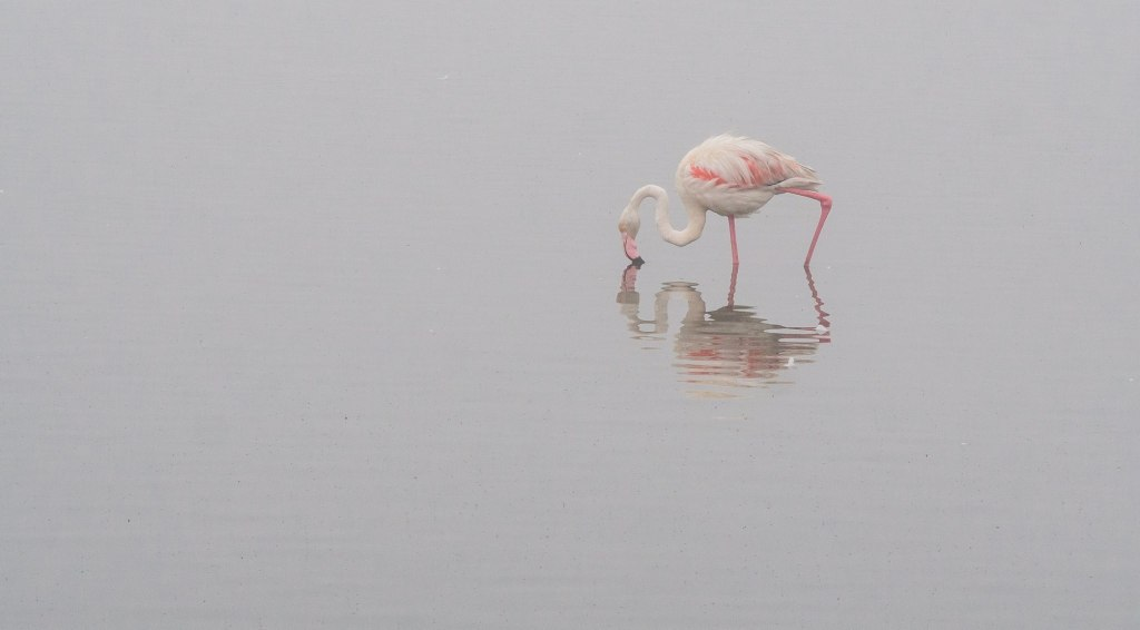 Lone flamingo in Walvis Bay