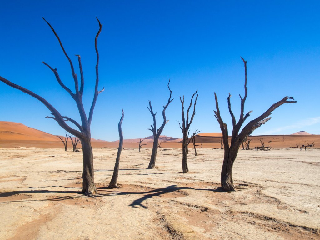 Trees and sand dunes in the Namib Naukluft Desert of Namibia