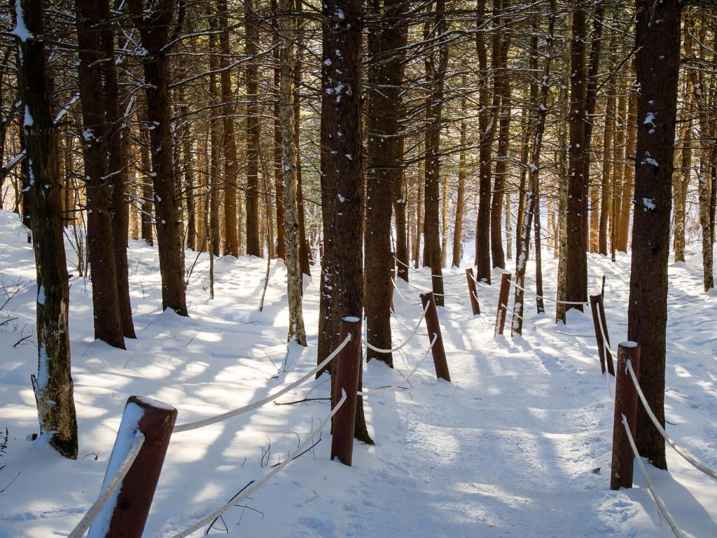 The forest in Taebaeksan National Park during the winter.