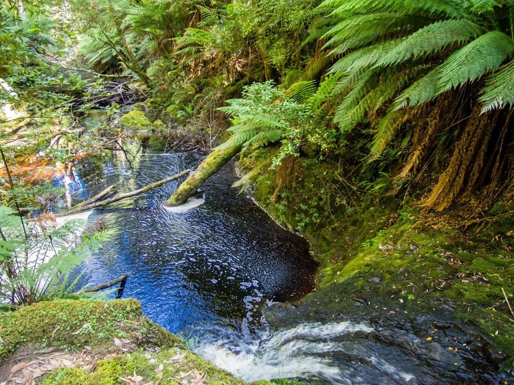 Hogarth Falls, Tasmania