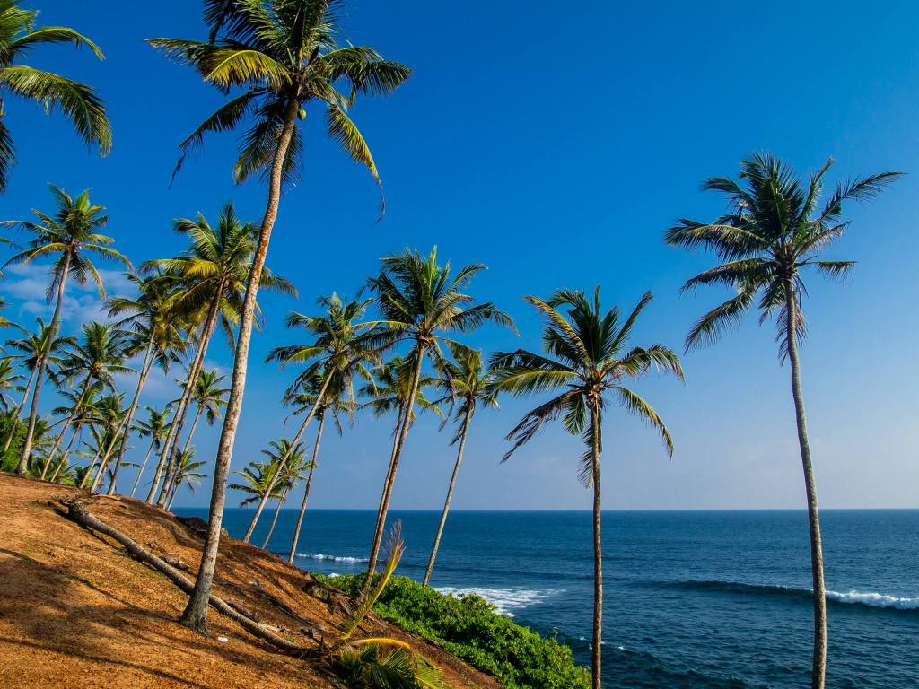 Coconut Tree Hill, Mirissa