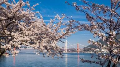 Namhae Island Spring