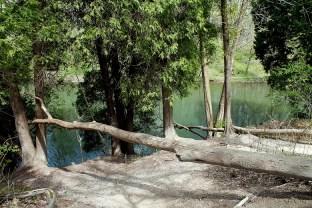 river fallen tree