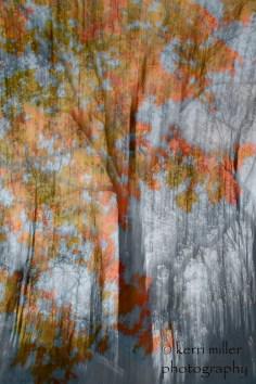 haunted autumn