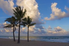 Three Palms - Fort Lauderdale - Steve Bruno