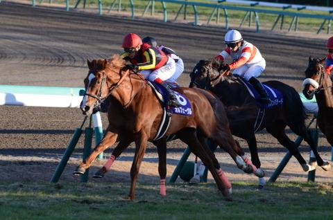 【競馬】京都8Rの武豊さんの騎乗危なすぎ・・【GIFあり】