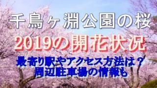 千鳥ヶ淵に咲く桜の開花状況と最寄駅やアクセス方法・周辺駐車場についてご紹介します