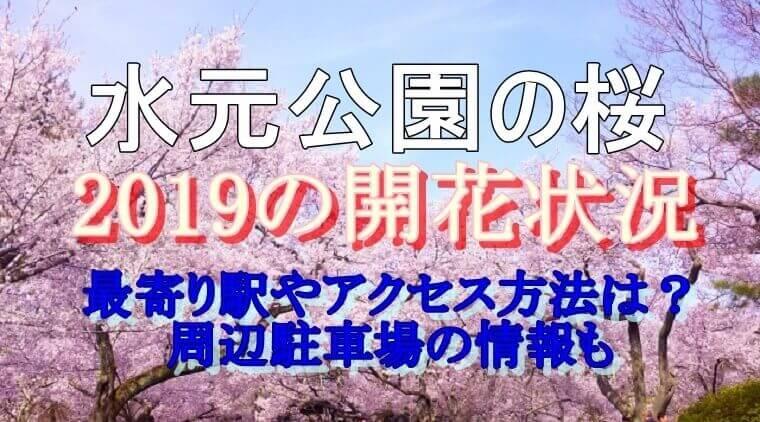 水元公園開花状況