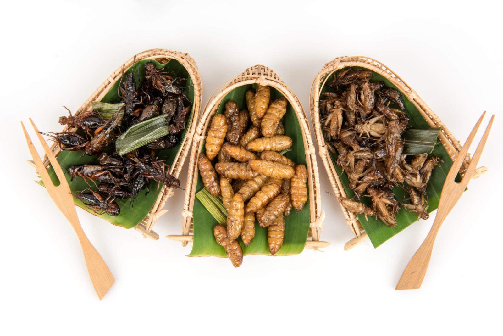 Muy nutritivos, pero los insectos comestibles en México están al margen de la ley - Goula