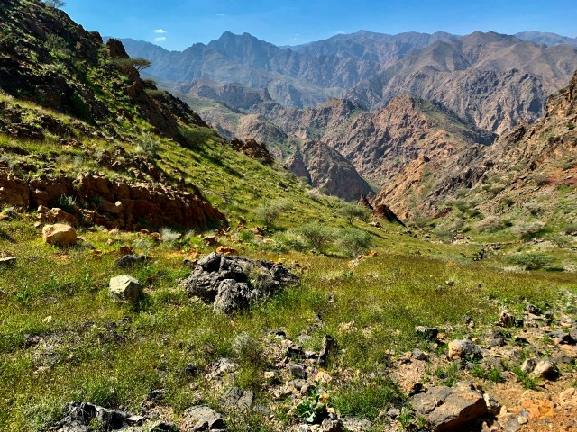 Green grass in Muscat Mountains