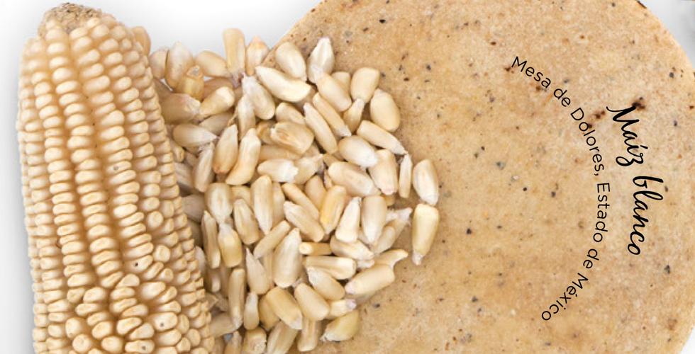 tortillas de maíz maíz blanco