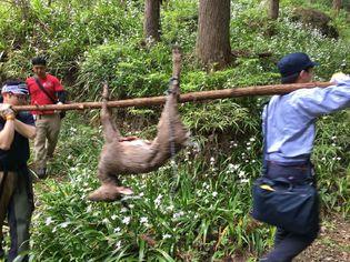 一般社団法人 猟協、2018年8月発足! -独自の技術とネットワークを活かして日本の獣害問題の解決に挑む-