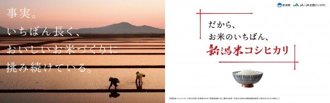 「お米のいちばんプロモーション」第二弾!『新潟米コシヒカリ』の6つの事実を伝える新広告ビジュアルを公開