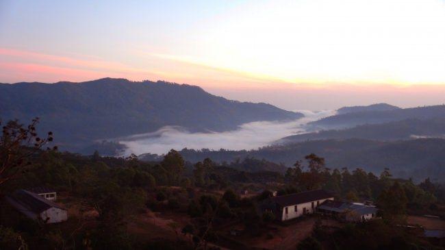 国際NGOピースウィンズ・ジャパンがクラウドファンディングで危機にある東ティモール産コーヒーの再起に挑戦