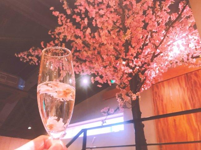【北の家族 有楽町本店】で究極の【#インドア花見】店内設置の桜のオブジェを眺めながら美味しい和食を。桜と良く合う春メニューも絶品!